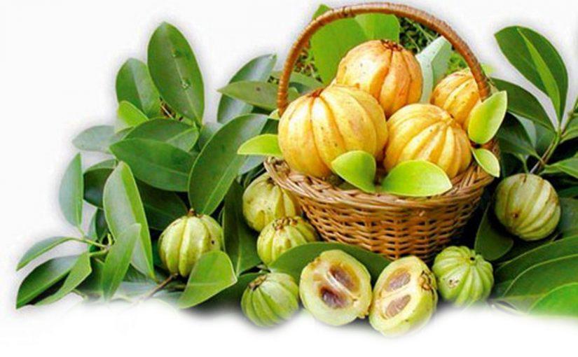 Garcinia cambogia, une bonne alternative pour la minceur